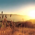 Late-Summer-Field-Summer-Landscape-